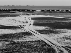 """L""""hiver à la plage 3 (cactus2016) Tags: plage plongée blackandwhite noiretblanc kerarzic paimpol reflets minimalisme atelierphoto plongéebréhec flickrfriday emptyspaces"""