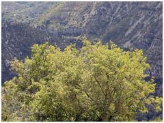 Le Grand Site du Cirque de Navacelles (abac077) Tags: france tree green nature vert canyon gorge paysage arbre vis cirque gard 2015 navacelles méandre