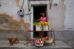 Flower Vendor (Tom Taylor (Windsor)) Tags: flowers santiago woman dog outdoor cuba vendor capitalism sales