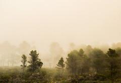 Mystic (Lotfisouidi) Tags: trees winter sky cloud mountain weather vintage photography shadows glimpse mystic lunacy myst