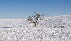 On a sunny Winter Day. (andreasheinrich) Tags: winter cold tree germany landscape deutschland snowy verschneit january felder sunny fields kalt sonnig landschaft baum badenwrttemberg neckarsulm nikond7000