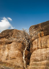 Loner (magicallights) Tags: tree rocks badami