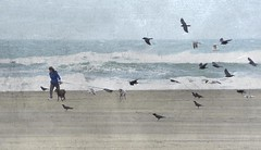 . (me*voil) Tags: ocean texture dogs water birds landscape mine waves gulls crows dogwalker