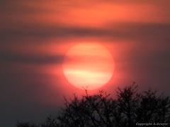 Normandie Sunset (FleurdeLotus28) Tags: winter sunset red sky sun mist france tree fog night landscape rouge nikon ciel coolpix normandie nuage campagne arbre brume coucherdesoleil branche orne