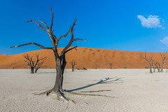 Dead Vlei Desert - Namibia (lucien_photography) Tags: africa trees tree landscape dead rouge nationalpark sand desert dunes sesriem namibia acacia sossusvlei deadvlei namibie namibdesert namibnaukluft hardap