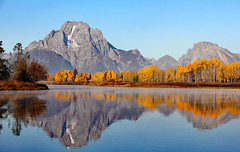 Early Morning At Oxbow Bend (Robert F. Carter Travels) Tags: autumn fall geese nationalpark wyoming grandtetons tetons nationalparks canadagoose waterscape mountainscape grandtetonnationalpark oxbowbend