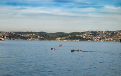 Fishing with boats (Ciddi Biri) Tags: sea turkey fishing turkiye kitlens istanbul bogazici bosphorus penepl3 1442rii m43turkiyecom