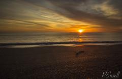 Napier Sunrise (PJEnsell) Tags: orange sun beach sunrise warm driftwood napier tranquil