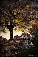 rbol a contraluz (bit ramone (on/off)) Tags: naturaleza tree nature contraluz andaluca rbol torcal mlaga antequera