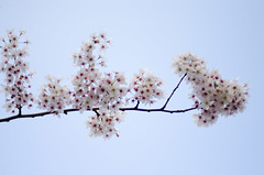 Rotterdam 10-04-2016 SM-23 (Pure Natural Ingredients) Tags: park flowers holland garden spring nikon d70 nederland thenetherlands sigma f18 f28 bloemen euromast zuid 105mm niceweather voorjaar schoonoord d90 50mmoutdoor botanicbotanishetuin
