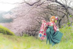 大正桜 (kiyurohi_d) Tags: japan 日本 静岡 伊豆 dollfiedream 松崎町
