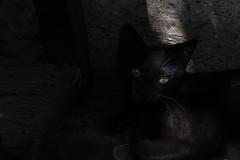 Darkness' little one (Pradip Chowdhury) Tags: hello pussycat friendsofzeusphoebe