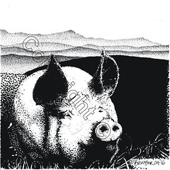 Pig with Cadair Idris, Snowdonia (myfanwy.brewster) Tags: pets texture animals fur pig eyes ears wallart whiskers snowdonia inkdrawing farmanimals stylized snout handdrawn pointillism cadairidris petportraits commissions welshart risingvalleymist overlookingdarowenanimalinkdrawingscom