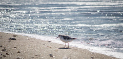 (L.Grey Photography) Tags: ocean beach nature birds animals pine canon campus rebel nc outdoor ministry center retreat trinity lutheran shores knoll efs episcopal sl1 50250mm
