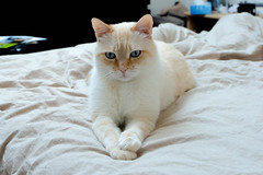 Mr Casper (Keinsei2) Tags: pet white animal cat kitten feline chat kitty casper fujifilm sphynx flin xa1