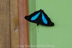 Argentinien_Insekten-59 (fotolulu2012) Tags: tierfoto