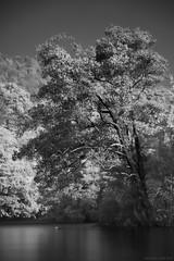 Serenity by Kali (Ramesh Adkoli) Tags: bw landscape blackwhite ganeshgudi capturenx d700