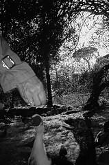 waiting for the food (uwaka) Tags: blackandwhite food blancoynegro film 35mm waiting hand comida ducks contax mano pelicula analogue esperando compact patos kodak400 analogico