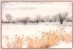 Early Spring (edispicsoriginal) Tags: field spring montreal lakeshore