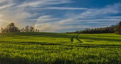 Abendsonne mit Halo-Erscheinung (matthias_oberlausitz) Tags: primavera feld himmel wolken halo regenbogen acker getreide flickrfriday nebensonne