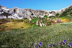 Engstligenalp (welenna) Tags: blue summer sky mountain snow mountains alps landscape switzerland view blumen berge alpen blume berneroberland adelboden schwitzerland