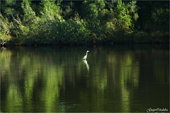 Sola en el pariso - Albufera Es Grau (Guijo Crdoba-fotografa) Tags: espaa spain nikond70s menorca baleares esgrau nikonflickraward flickrtravelaward guijocordoba