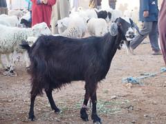 P4161997 (t_y_l) Tags: morocco marokko tinghir suq 2016 tinerhir