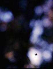Spiders, Balcones Canyonlands Wildlife Refuge, Texas (nsandin88) Tags: park wild color macro 120 mamiya film mediumformat bug spider texas close natural kodak bokeh arachnid creepy canyonlands epson exploration preserve manualfocus balcones rz67 ektar mamiyarz67 developedathome kodakektar v850 ektar100