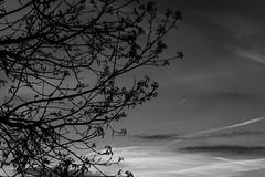 Shooting the sky (Daniel C. Brunner) Tags: sky blackandwhite bw germany landscape mono blackwhite sony bnw schwarzweis sonyalpha a6000 sel35f18 alpha6000