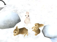 bunnies! (earthfayrie) Tags: winter sl secondlife letitsnow secondlife:z=24 secondlife:y=132 secondlife:x=101 secondlife:region=islesoflyonesse secondlife:parcel=letitsnow