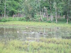 IMG_6873.jpg (Kuruman) Tags: sylhet bangladesh srimangal