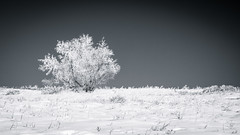 Tree On The Hill 2 (asphotographics) Tags: topography nature water frost highcontrast 2016 hill snow plant circularpolarizer tree alberta bluesky sky vignette decade horizontal naturallight ice monthofyear postprocessing filter polarizer fieldofview winter calgary monochrome splittone asphotographics time outdoor cooltone lightsource toning cold bowmontpark hoarfrost january country duotone light aspectratio effects timeofday daytime landscape canada season blackandwhite dynamicrange