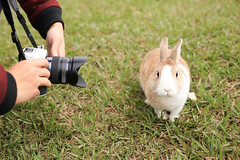(ina070) Tags: rabbit nature animals canon taiwan taipei    6d   canon6d