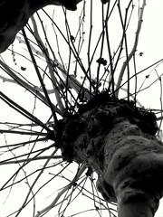 Platanen (Ellen Ribbe) Tags: trees bw sw frankfurtammain mainufer platanen sitzender stadtfralle