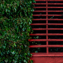stairway in red (dotintime) Tags: wood red green up climb stair down stairway foliage step greenery descend rise tread ascend riser meganlane dotintime