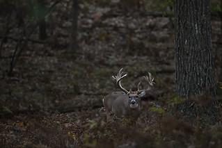 Michigan Whitetail Hunt 16