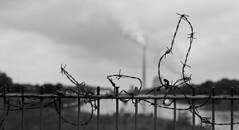am.kanal - Gesichert (paulkarrie) Tags: monochrome nrw kraftwerk ruhrgebiet heil rünthe dattelnhammkanal