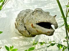 GARGOYLE #2 (Darkroom Daze) Tags: sculpture art creative gargoyle beast bermuda spanishpoint myinlawshouse pembrokeparish clamberup florencefish
