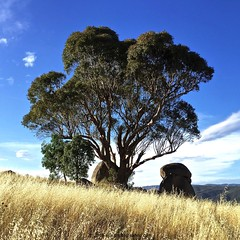 'Summer In Australia' - January, 2016 (aus.photo) Tags: summer sky nature grass clouds landscape rocks australia boulders canberra eucalyptus act canberranaturepark ausphoto