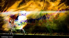 paris-1 (R-Pe) Tags: show camera abstract canon photo nikon foto fotografie photographie sony picture pic exhibition peter gift bild geschenk ausstellung aufnahme melancholie 1764 rpe rbi 1764org www1764org