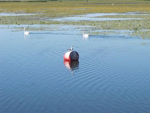 2010 07 08 Polonia - Warmia Masuria - Elblag - Il Canale - Jez Druzno - Lago Druzno - Area protetta_0915