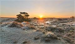 Sunrise Kalmthoutse Heide (jos.pannekoek) Tags: morning sunrise landscape nikon belgie tokina heide landschap kalmthout zonsopkomst d7000 tokina1116mmf28 tokinaaf1116mmf28