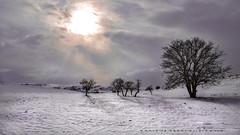 The light of short days (drstar.) Tags: winter sunlight spotlight winterlandscape wintersun winterscene flickrturkey nikond610