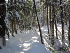 painted winter trail (jgagnon63@yahoo.com) Tags: trees winter snow january backlighting snowscape superphoto photopainting paintingeffect hiawathanationalforest hemlocktrees mckeeverhillstrail