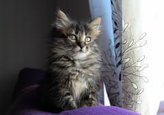 El mejor regalo (Marisa Cuesta) Tags: ventana gata mirada gatita peluda