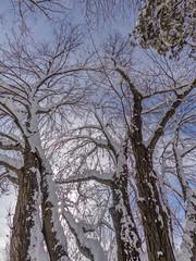 DSC01636-2 (johnjmurphyiii) Tags: winter usa snow yard connecticut shelly cromwell originaljpeg johnjmurphyiii 06416 sonycybershotdsch90