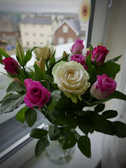 roses 35/366 (auroradawn61) Tags: uk flowers roses england interestingness dorset february windowsill poole 2016 explored hamworthy lumixlx100 2016yip 366daysin2016