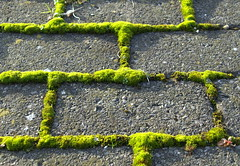 Moss on Blocks (Tony Worrall) Tags: county uk england cold green geometric nature grass lines square moss stream pattern tour open place floor natural northwest unitedkingdom bricks country north grow visit location lancashire growth walkway area preston blocks mold sunlit northern update attraction lancs welovethenorth