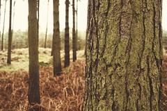 dat tree tho (ediblemanager) Tags: tree green scotland moss woods fuji fife bark 24mm miranda f28 tentsmuir xe1