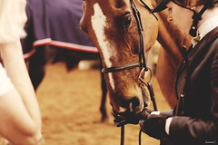 (suzcphotography) Tags: show horse canon 50mm adult riding jumper hunter equestrian virgina equine t3i ingate 3ft swvhja